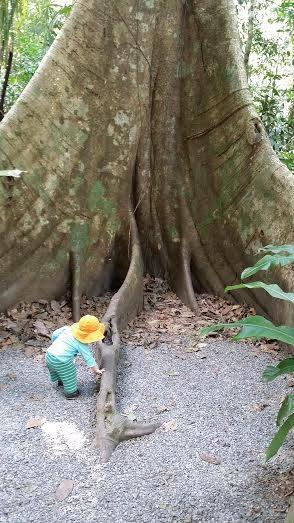 Toby tree